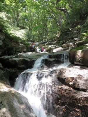 栃の大木の森を流れる滑滝を溯る