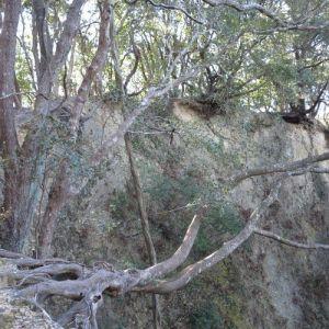 登山道の真下の断崖絶壁は小笠層群の露頭