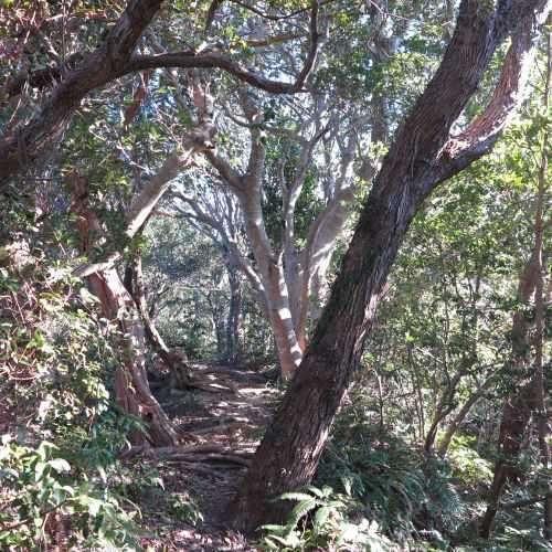 小笠山の原始性のある植生